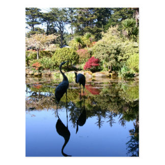 Flamingo Reflection Postcard