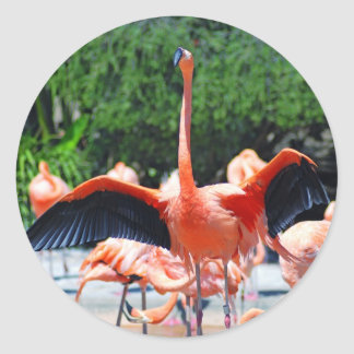 Flamingo Round Sticker