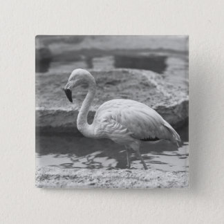 Flamingo wading in water B&W 2 Inch Square Button