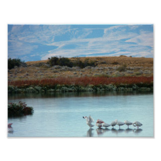 Flamingos at dusk poster