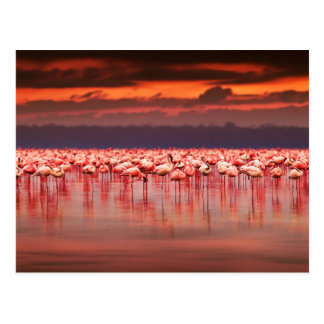 Flamingos at Sunset Postcard