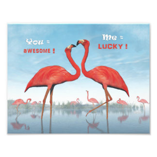 Flamingos courtship : you = awesome, me = lucky photo print