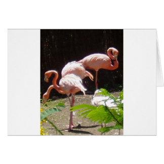 flamingos in Pink Card