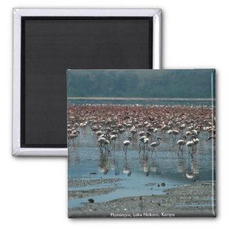 Flamingos, Lake Nakuru, Kenya Magnet