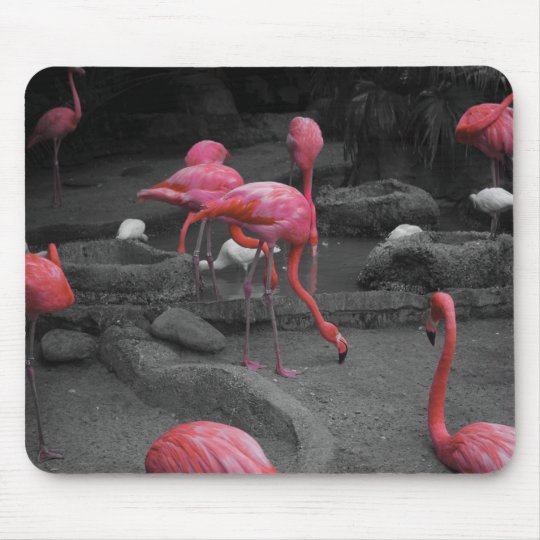Flamingos! Mouse Pad