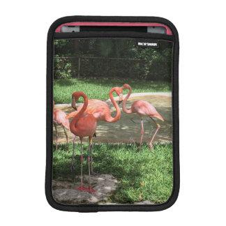 Flamingos on the Riviera Maya in Mexico iPad Mini Sleeve