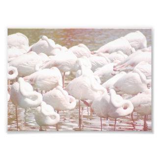 Flamingos Photo Print