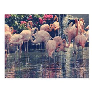 Flamingos Postcard