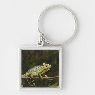 Flap-neck Chameleon Silver-Colored Square Keychain