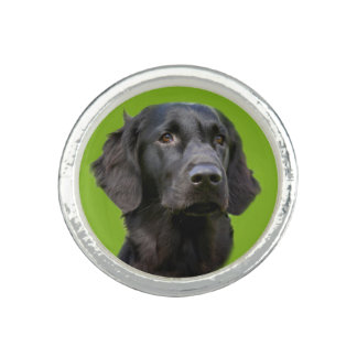 Flat Coated Retriever dog, black beautiful photo Photo Ring