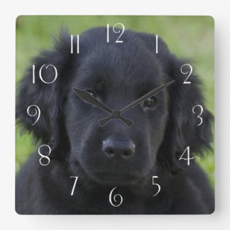 Flat-Coated Retriever Puppy Square Wall Clock