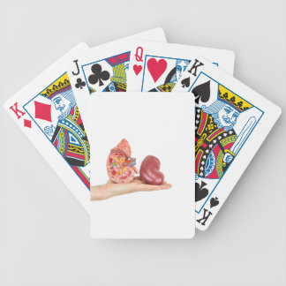 Flat hand showing model human kidney bicycle playing cards