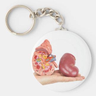 Flat hand showing model human kidney keychain