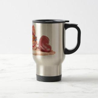 Flat hand showing model human kidney travel mug