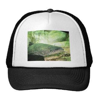 Flathead CatFish Trucker Hat