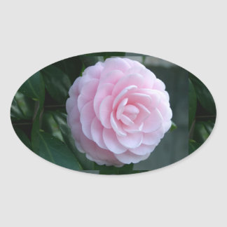 Flawless Camellia - Oval Sticker
