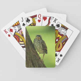 Fledging Chipping Sparrow Playing Cards