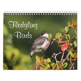 Fledgling Birds Wall Calendars