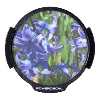 Fleur assez bleue de jardin de jacinthe décalcomanie pour fenêtre LED