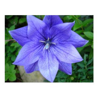 Fleur bleue postcard