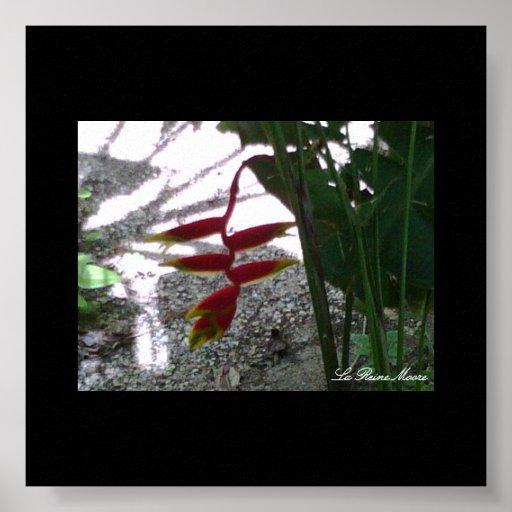 Fleur de Guadeloupe Poster