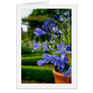 Fleur de jardin d'agrément dans le pot - bleu - carte de correspondance