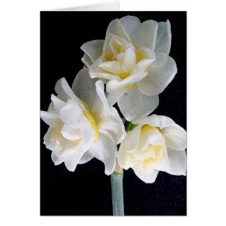 Fleur de Jonquil - 3 1 d Ecclesiastes Cartes De Vœux