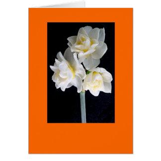 Fleur de Jonquil - 3:1 d'Ecclesiastes Carte