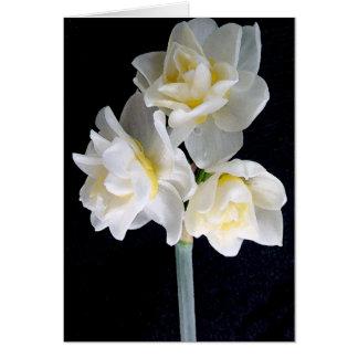 Fleur de Jonquil - 3:1 d'Ecclesiastes Carte De Vœux