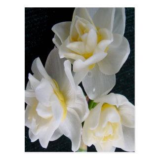 Fleur de Jonquil - 3:1 d'Ecclesiastes Carte Postale