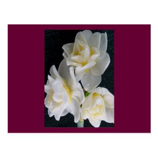 Fleur de Jonquil - 3:1 d'Ecclesiastes Cartes Postales