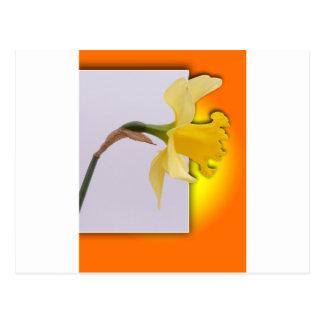 Fleur de jonquille le cadre cartes postales
