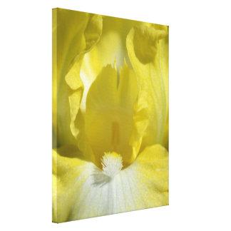 Fleur d'iris jaune toile