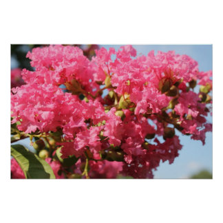 Fleur du Myrte de crêpe