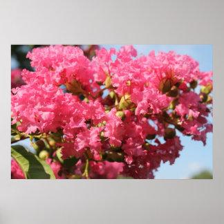 Fleur du Myrte de crêpe Poster