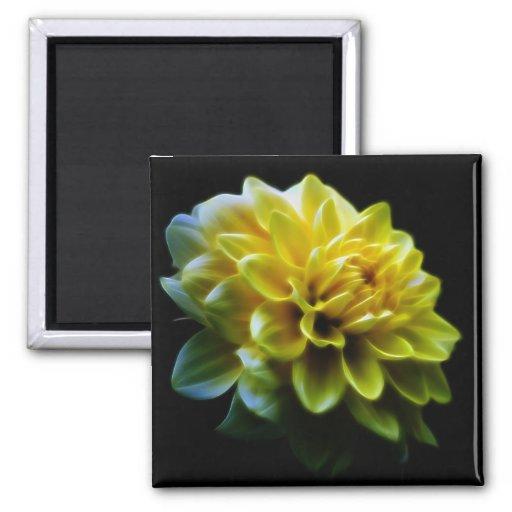 Fleur et signification de dahlia magnets
