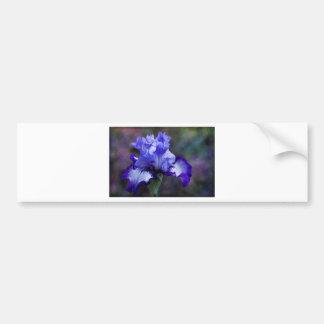 Fleur grande pourpre et bleue d'iris barbu autocollant de voiture
