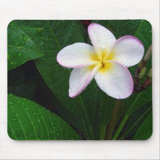Fleur hawaïenne jaune et blanche Mousepad de Plume Tapis De Souris