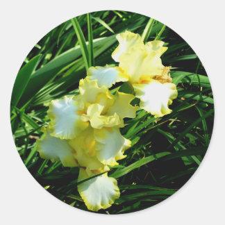 Fleur jaune et blanche d'iris sticker rond