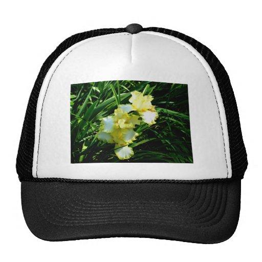 Fleur jaune et blanche d'iris casquettes de camionneur