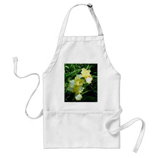 Fleur jaune et blanche d'iris tablier