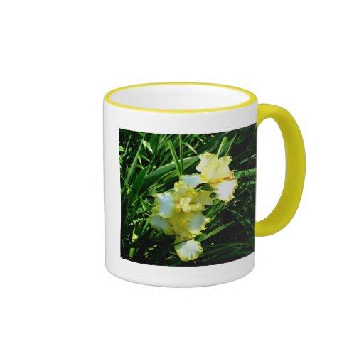 Fleur jaune et blanche d'iris tasses