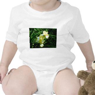Fleur jaune et blanche d'iris bodies