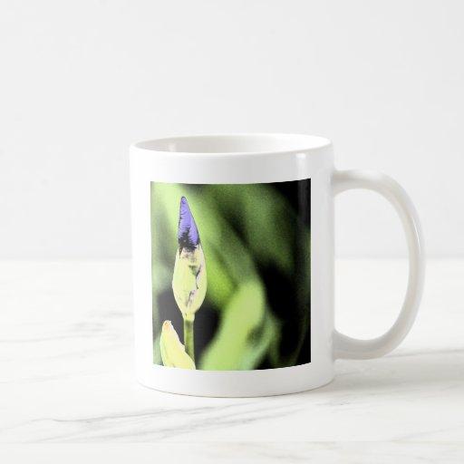 Fleur pourpre d'iris tasses