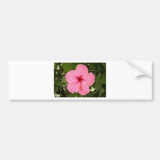 Fleur rose de ketmie en fleur autocollant de voiture