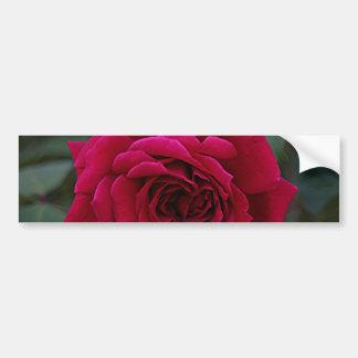 Fleur rose rouge-foncé en fleur dans le jardin autocollant de voiture