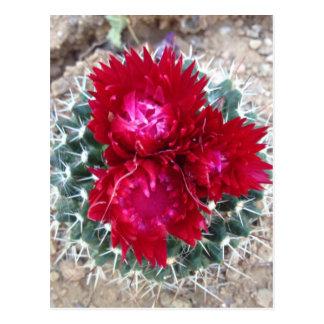 Fleur rouge de cactus cartes postales