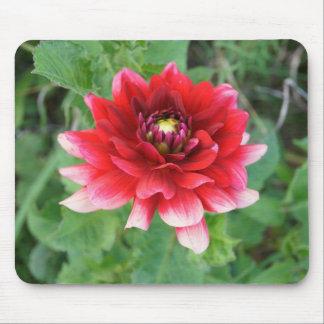 Fleur rouge de dahlia, Mousepad Tapis De Souris