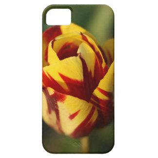 Fleur rouge et jaune de tulipe coques iPhone 5