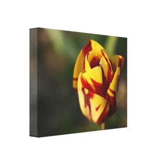 Fleur rouge et jaune de tulipe impressions sur toile